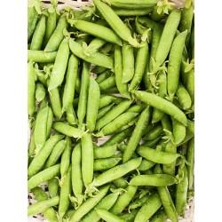 Warsztaty: Jak wydobyć smak warzyw/ Para