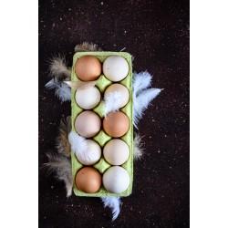 Jajka wolny wybieg (10 sztuk)